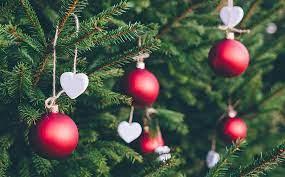 Výběr živého vánočního stromku