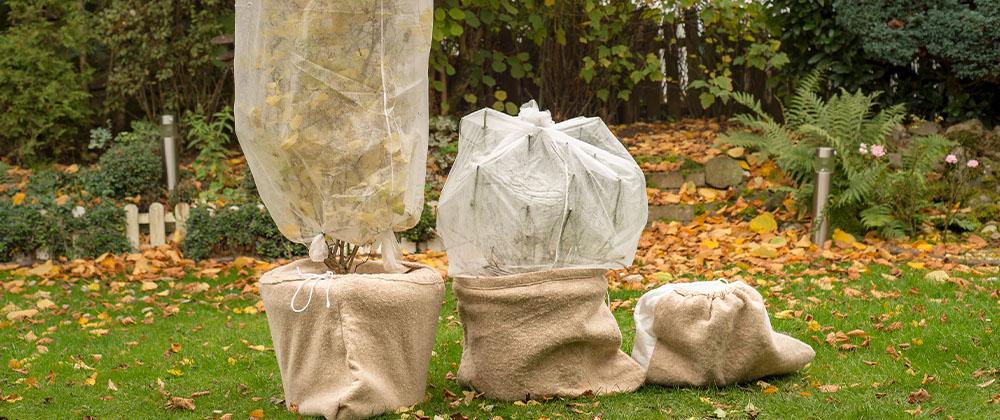 Jak ochránit rostliny před zimou?